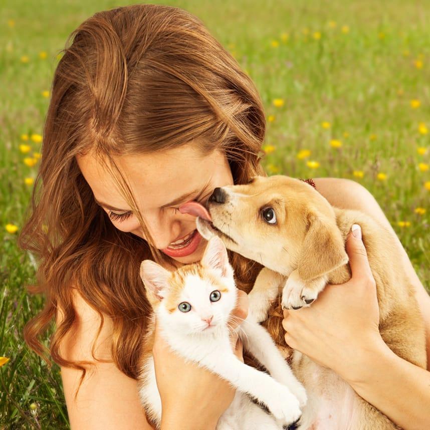 Neşeli Patiler Evcil Hayvan Sağlık Sigortası